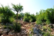 Medjugorje, Anniversario Apparizioni 2016: Sentiero sul Podbrdo – Foto di Sardegna Terra di pace – Tutti i diritti riservati