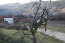 Medjugorje, Capodanno 2017: croce – Foto di Sardegna Terra di pace – Tutti i diritti riservati
